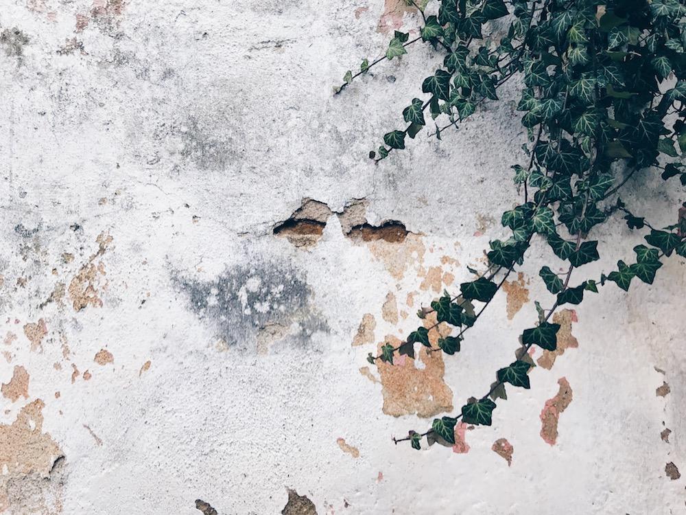 památkově chráněná ruina Třebíč UNESCO