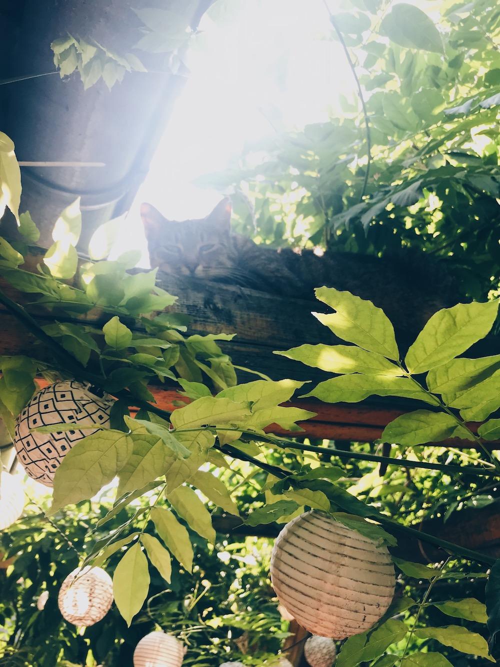 kočka na střeše